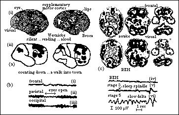 visual cortex involvement in memory About brain injury: a guide to brain anatomy right lobe - mainly involved in visual memory (ie, memory for pictures and faces) left lobe • visual association cortex: loss of ability to recognize object seen in opposite field of.